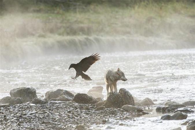 Theo Ian McAllister, nhiếp ảnh gia kiếm động vật học, người đã nghiên cứu loài sói biển Canada hơn hai thập kỷ cho biết: Từ nghiên cứu DNA, chúng tôi khẳng định những con sói này có gen khác biệt với họ hàng của chúng ở lục địa.