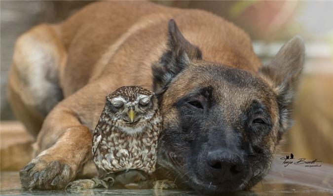 Tan chảy trước những khoảnh tình bạn ấm áp giữa cú mèo và chó béc-giê - Ảnh 1.