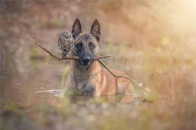 Tan chảy trước những khoảnh tình bạn ấm áp giữa cú mèo và chó béc-giê - Ảnh 25.