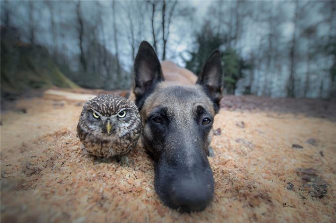 Tan chảy trước những khoảnh tình bạn ấm áp giữa cú mèo và chó béc-giê - Ảnh 3.