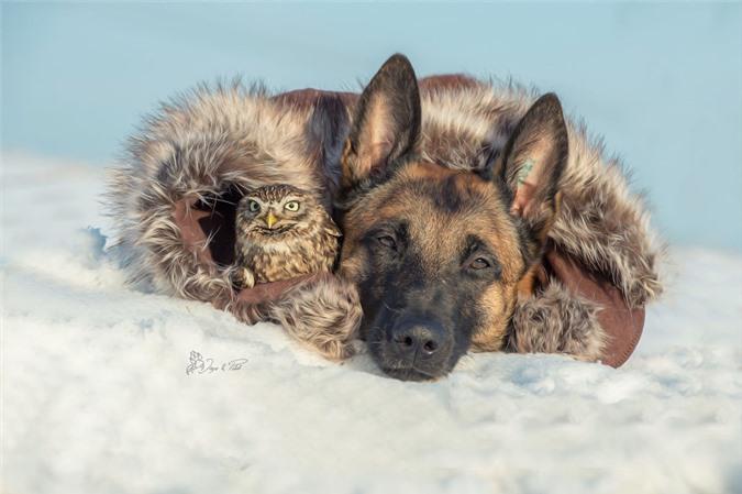 Tan chảy trước những khoảnh tình bạn ấm áp giữa cú mèo và chó béc-giê - Ảnh 7.
