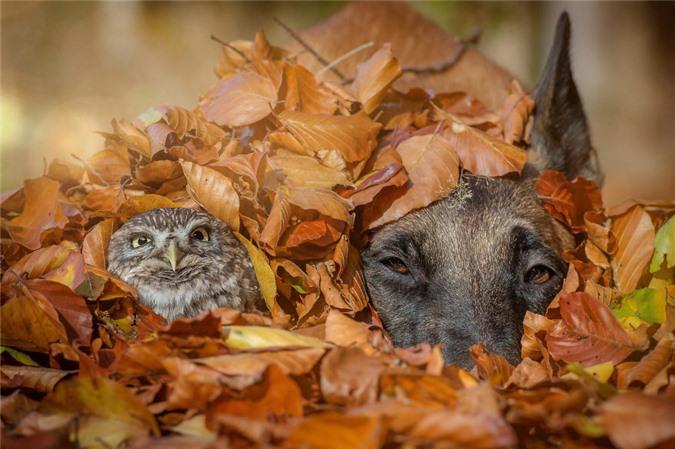 Tan chảy trước những khoảnh tình bạn ấm áp giữa cú mèo và chó béc-giê - Ảnh 9.