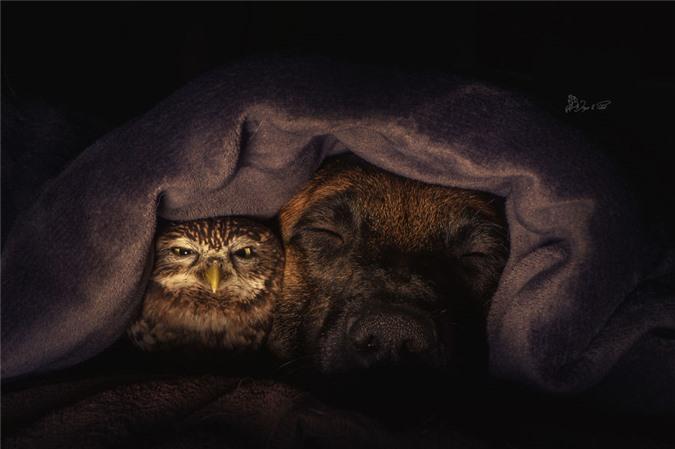 Tan chảy trước những khoảnh tình bạn ấm áp giữa cú mèo và chó béc-giê - Ảnh 11.