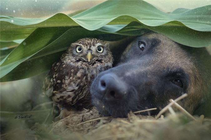Tan chảy trước những khoảnh tình bạn ấm áp giữa cú mèo và chó béc-giê - Ảnh 13.