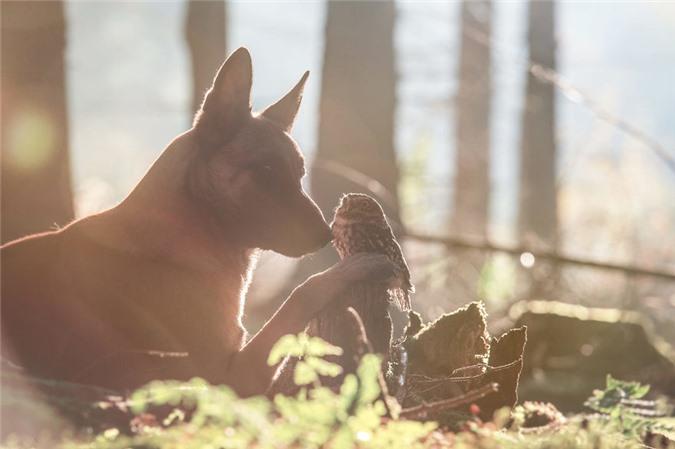 Tan chảy trước những khoảnh tình bạn ấm áp giữa cú mèo và chó béc-giê - Ảnh 15.