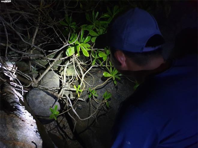 Trắng đêm theo chân thợ săn cua đá trên đảo Cù Lao Chàm - 1