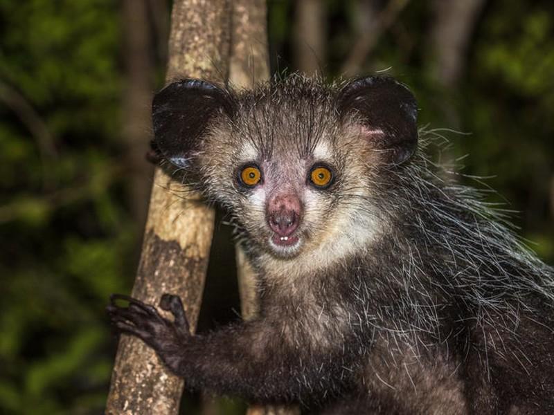 Những loài động vật có khuôn mặt 'ác quỷ' khiến bạn dễ gặp ác mộng