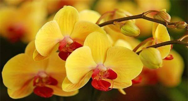 Cách trồng hoa lan trong chậu và kĩ thuật nhân giống cho hoa to, đẹp bốn mùa - 12