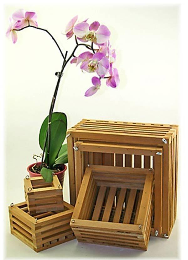 Cách trồng hoa lan trong chậu và kĩ thuật nhân giống cho hoa to, đẹp bốn mùa - 3