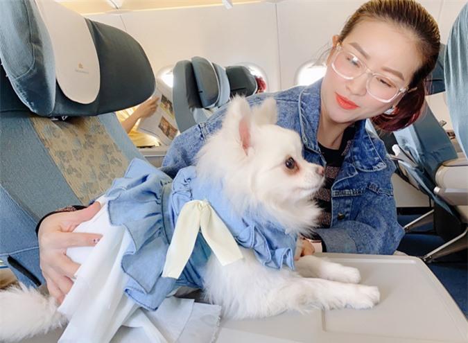 Đã quen đi với cô chủ nhiều lần, cún cưng của Kiều Linh tỏ ra ngoan ngoãn khi ngồi máy bay.