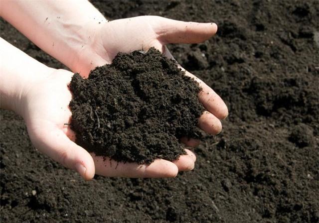 Mách chị em cách trồng chanh trong chậu cực dễ cho cây sai trĩu quả, hái mỏi tay - 3