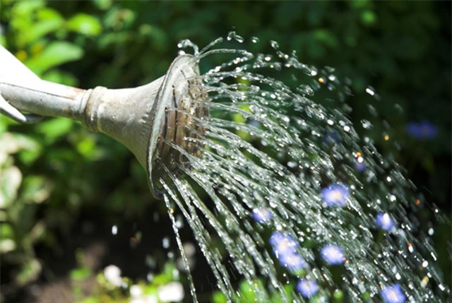 Mách chị em cách trồng chanh trong chậu cực dễ cho cây sai trĩu quả, hái mỏi tay - 4