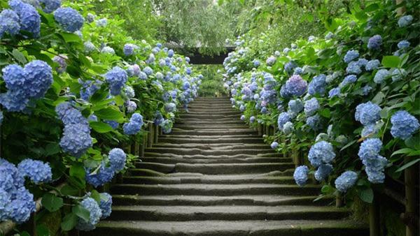 """8 loại cây trồng hàng rào tuyệt đẹp nhất định phải có để nhà """"nổi nhất xóm"""" - 1"""
