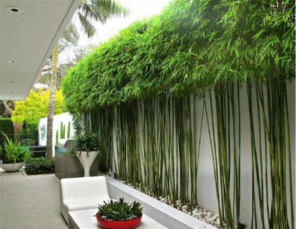 """8 loại cây trồng hàng rào tuyệt đẹp nhất định phải có để nhà """"nổi nhất xóm"""" - 12"""