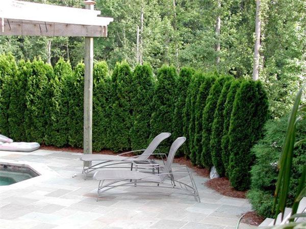 """8 loại cây trồng hàng rào tuyệt đẹp nhất định phải có để nhà """"nổi nhất xóm"""" - 17"""