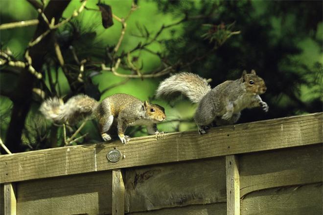Chú sóc lầy lội: Đi xin ăn, thấy ngon liền gọi hội, ăn xong lại có hành động tuyệt vời - Ảnh 2.