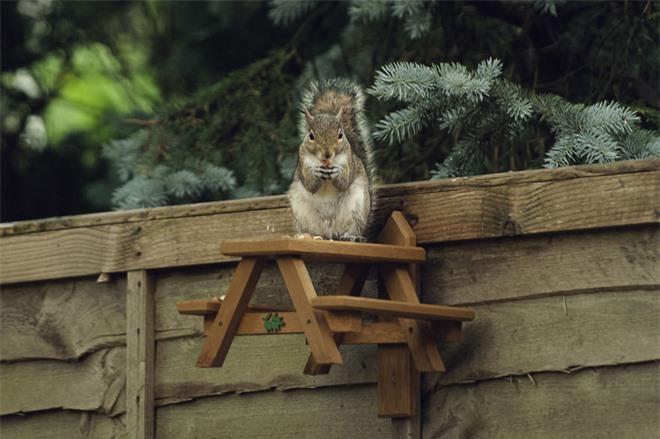 Chú sóc lầy lội: Đi xin ăn, thấy ngon liền gọi hội, ăn xong lại có hành động tuyệt vời - Ảnh 4.