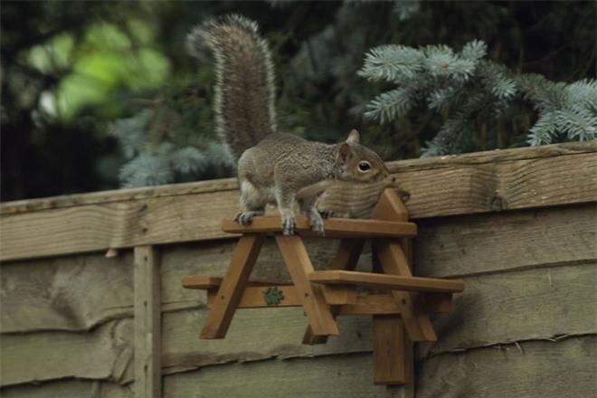Chú sóc lầy lội: Đi xin ăn, thấy ngon liền gọi hội, ăn xong lại có hành động tuyệt vời - Ảnh 6.