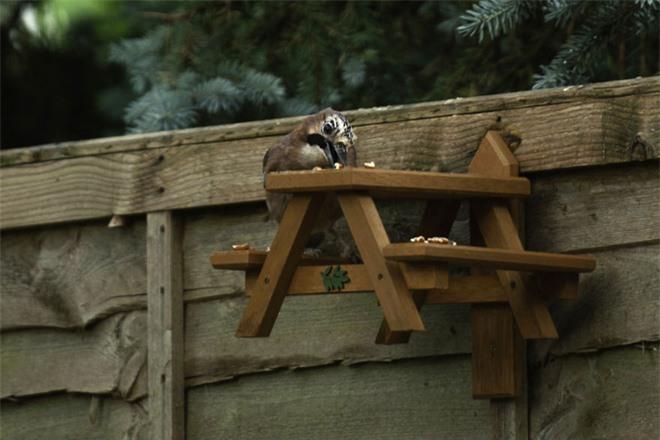 Chú sóc lầy lội: Đi xin ăn, thấy ngon liền gọi hội, ăn xong lại có hành động tuyệt vời - Ảnh 7.