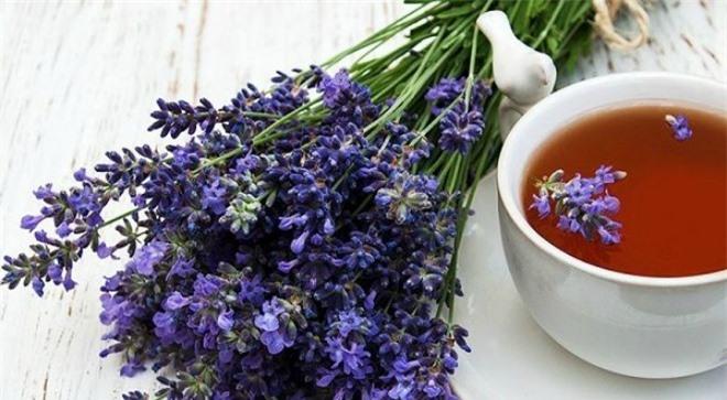 Học cách trồng hoa oải hương cho nhà vừa đẹp vừa thơm ngát - 2