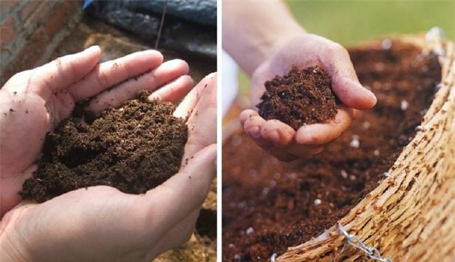 Học cách trồng hoa oải hương cho nhà vừa đẹp vừa thơm ngát - 8
