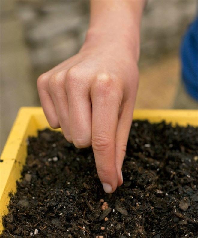 Học cách trồng hoa oải hương cho nhà vừa đẹp vừa thơm ngát - 9