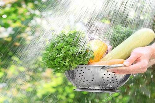 Người ăn rau sống dễ đối mặt với nguy cơ cao mắc chứng viêm nhiễm đường tiêu hoá, giun sán hoặc nhiễm độc từ thuốc trừ sâu.