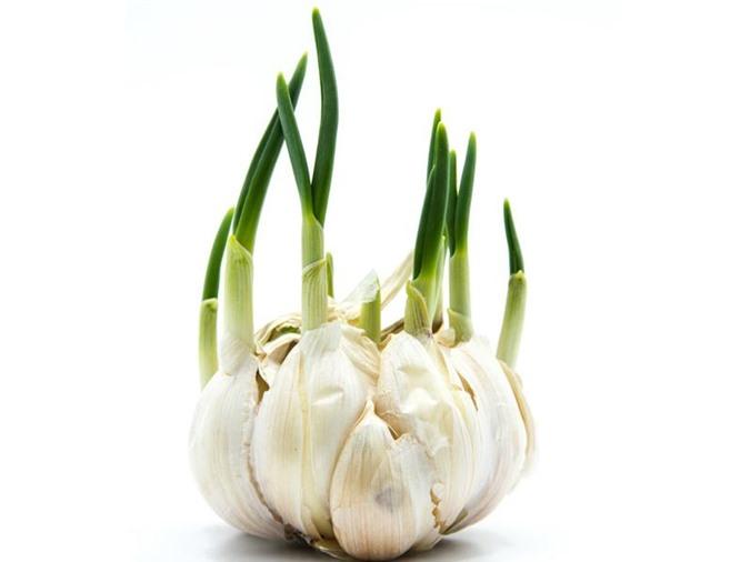 """6 thực phẩm mọc mầm không hề độc mà là """"thần dược"""" ngừa cả ung thư nhiều người bỏ phí - 10"""