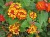 """7 loại hoa quen thuộc ở Việt Nam, đẹp mê mẩn nhưng chạm vào dễ """"gặp ngay thần chết"""""""