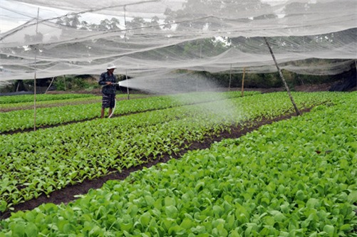 Hà Nội dự kiến thu thêm 2000 tỷ mỗi năm từ sản xuất rau sạch - Ảnh 1.