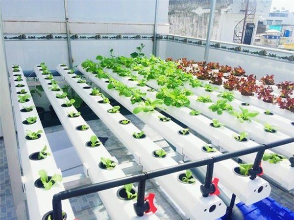 Nhà chật mà vẫn muốn ăn rau sạch, học ngay cách trồng rau thủy canh vừa sạch vừa nhàn - 2