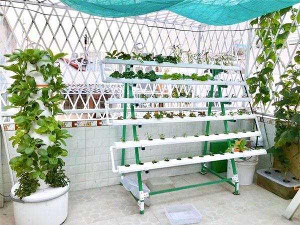 Nhà chật mà vẫn muốn ăn rau sạch, học ngay cách trồng rau thủy canh vừa sạch vừa nhàn - 4