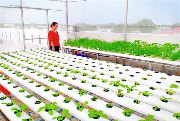 Nhà chật mà vẫn muốn ăn rau sạch, học ngay cách trồng rau thủy canh vừa sạch vừa nhàn - 7