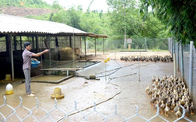 Chăn nuôi vịt bầu theo chuỗi giá trị giúp nâng cao hiệu quả kinh tế