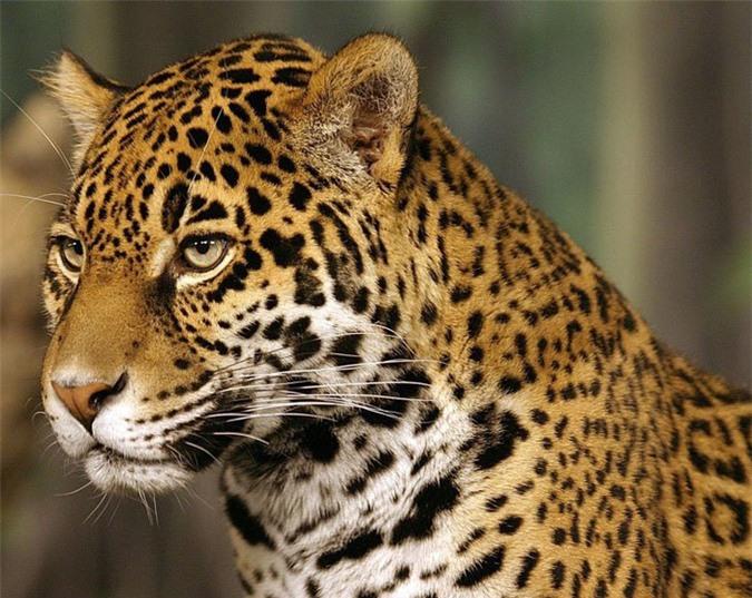 16 loài động vật quyến rũ nhất hành tinh thông qua cuộc bình chọn của 170.000 người - Ảnh 11.