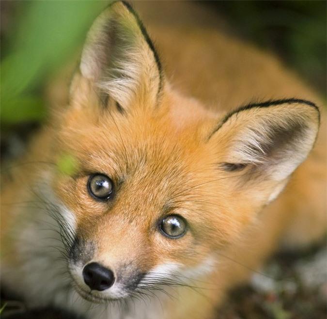 16 loài động vật quyến rũ nhất hành tinh thông qua cuộc bình chọn của 170.000 người - Ảnh 13.