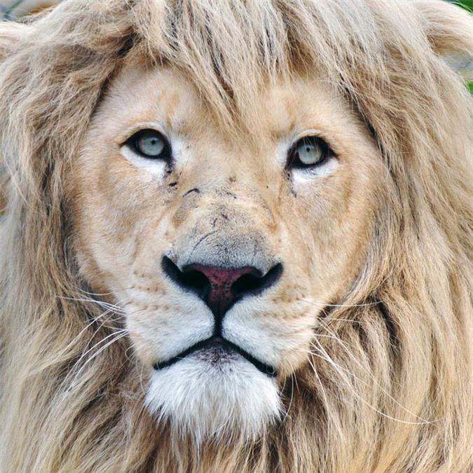 16 loài động vật quyến rũ nhất hành tinh thông qua cuộc bình chọn của 170.000 người - Ảnh 7.