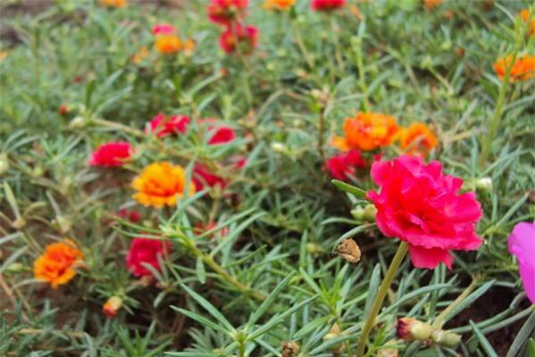 9 loài hoa treo giỏ rực rỡ nhất, dễ trồng nhất trong nhà - 9