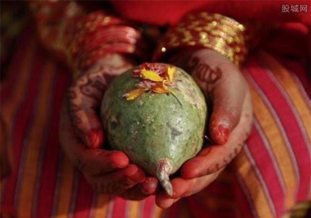 Người Newar dùng quả Bael để làm đối tượng kết hôn lần đầu tiên.