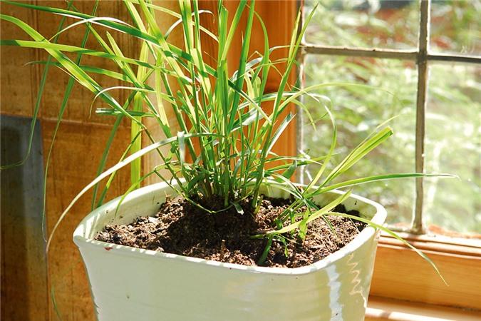 Cách trồng 7 loại cây thảo mộc và gia vị đặc trưng của châu Á ngay trong chính ngôi nhà bạn - Ảnh 1.