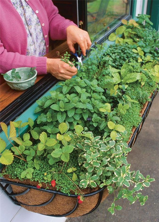Cách trồng 5 loại cây gia vị đặc trưng ngay trong chính ngôi nhà bạn - Ảnh 5.