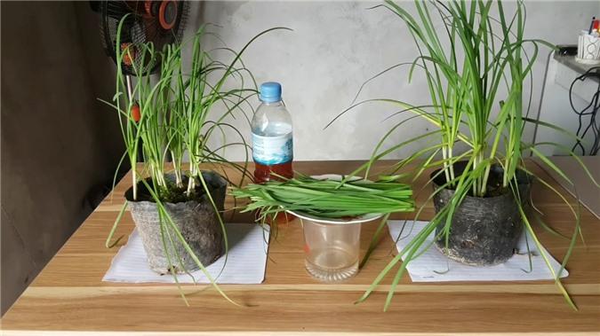 Cách trồng 5 loại cây gia vị đặc trưng ngay trong chính ngôi nhà bạn - Ảnh 6.