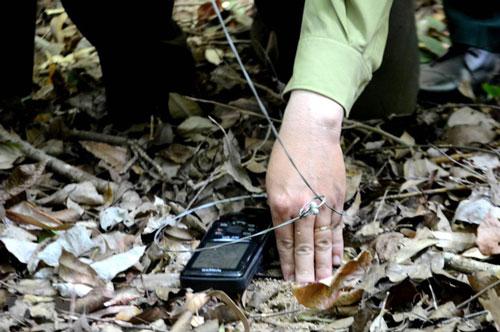 Loại bẫy dây rút có thể bắt được nhiều loại động vật khác nhau. Ảnh: TTXVN.