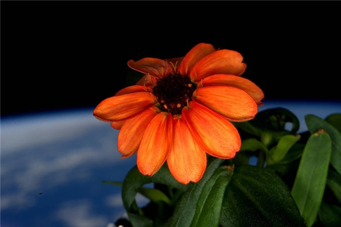 Vẻ đẹp bất tận của Trái Đất trong bộ ảnh được chụp từ vũ trụ - 7