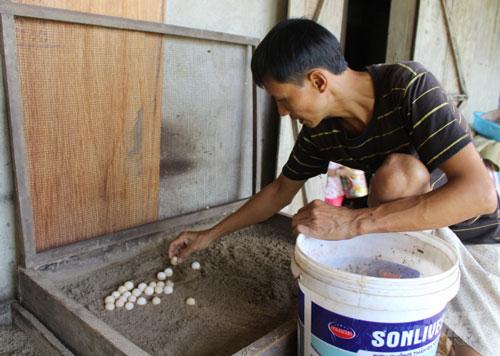 Toàn bộ trứng được ấp trong thùng với nhiệt độ khoảng 35°C. Ảnh: Mai Chiến.