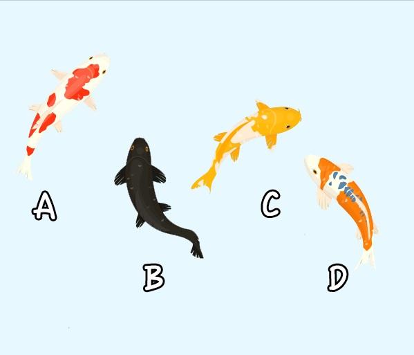 Bạn chọn con cá nào?