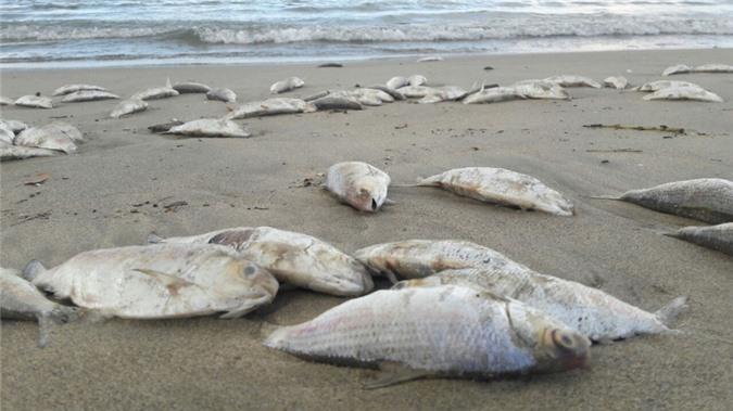 Nhặt được cá chết là điềm không may mắn