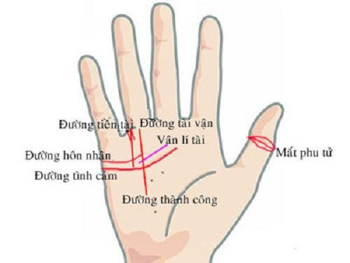 Đốt thứ hai của ngón cái có nhiều vân dấu hiệu may mắn