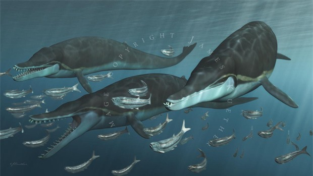 Ai bảo cá heo hiền lành dễ thương? Từng có một chủng cá heo đã gieo rắc kinh hoàng cho đại dương, đến cá mập trắng cũng phải khiếp sợ - Ảnh 1.