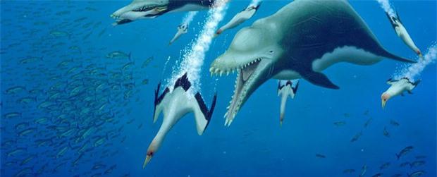 Ai bảo cá heo hiền lành dễ thương? Từng có một chủng cá heo đã gieo rắc kinh hoàng cho đại dương, đến cá mập trắng cũng phải khiếp sợ - Ảnh 2.